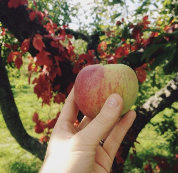 7 Reasons to Fall for Bayfield + Apple Festival | Duluth Moms Blog