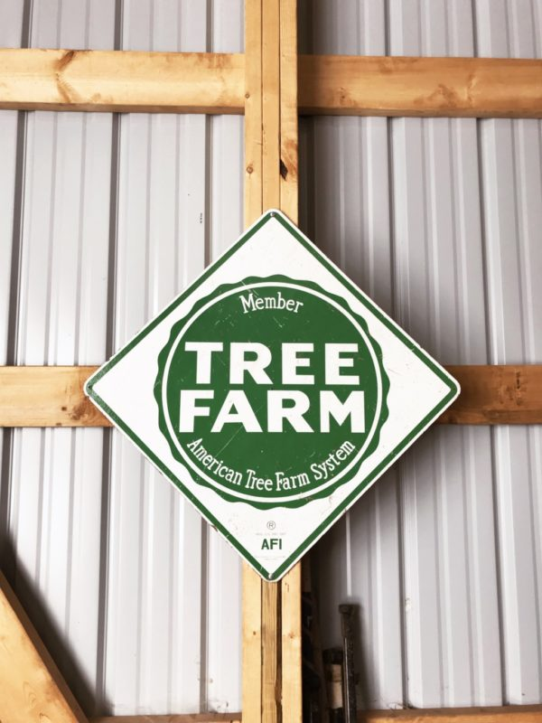 Creating New Christmas Traditions at the Hoffbauer Tree Farm | Duluth Moms Blog