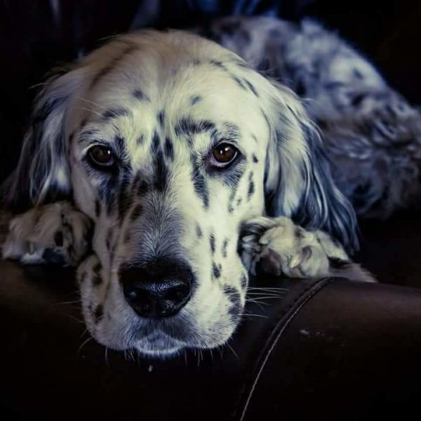 The Love of a Dog   Duluth Moms Blog