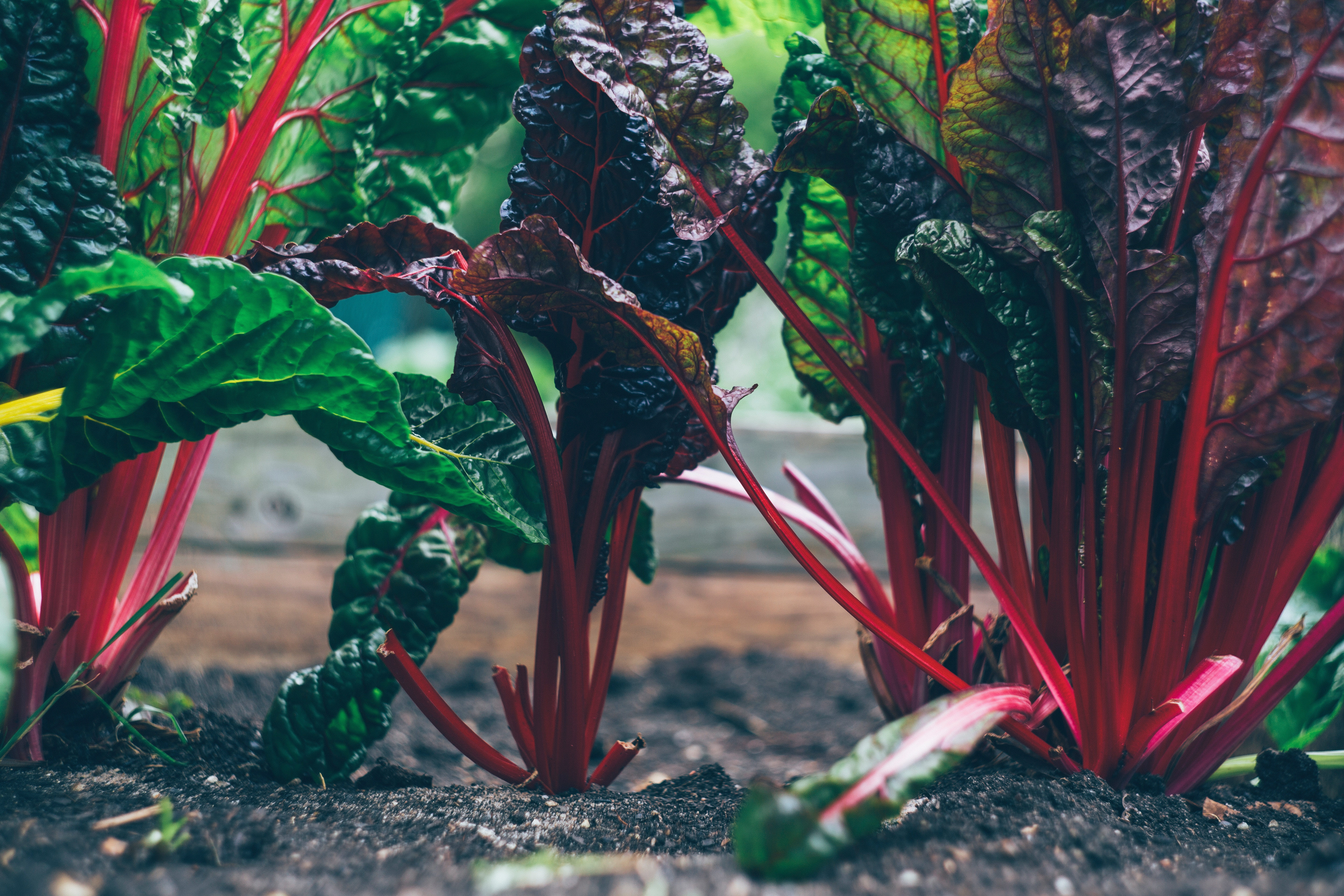 17 Essential Tips for Gardening Success   Duluth Moms Blog