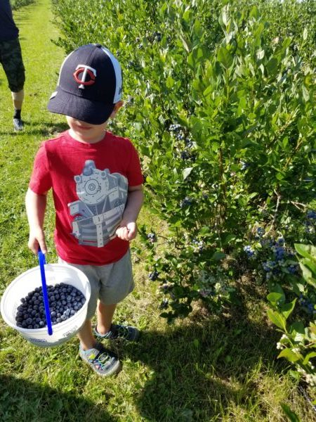 Embracing Blueberry Season: Dessert and Breakfast, Too!   Duluth Moms Blog