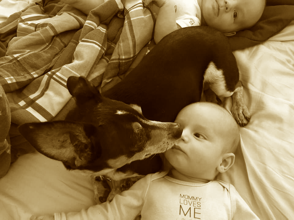 Don't Ditch the Dog: Your Children Will Thank You   Duluth Moms Blog
